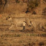 Nungubane Game Lodge Picture