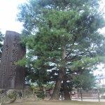 安兵衛手植えの松(長徳寺)