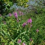 Montezuma National Wildlife Refuge Foto