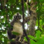 Fotografie: Jungle Trekking in Ketambe with Jhony Jungle