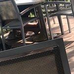 Yo no he podido disfrutar de una comida con mi mascota en la terraza del restaurante que además