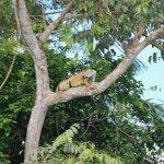 Foto de Gatun Explorer Panama Canal Jungle Day Tour