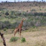Photo of Heritage Day Tours & Safaris