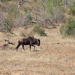 Heritage Day Tours & Safaris Photo