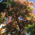Beautiful tress in bloom