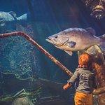 les aquariums de maries