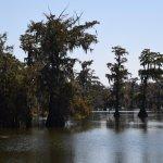 Champagne's Cajun Swamp Tours