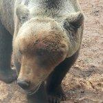 Photo of Parc Animalier de Gramat