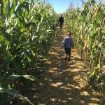 Wolfe Island Corn Maze, Is this the right way?