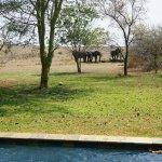 Photo of Savanna Private Game Reserve