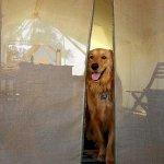 Dog friendly!
