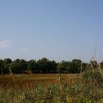 Illinois Beach State Park Wetlands