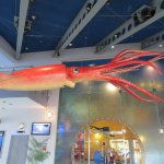 Giant Squid in Main Lobby