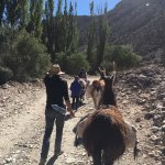 Photo of Caravana De Llamas Day Tours