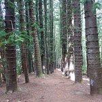 Photo of Sleeping Giant Trail