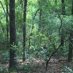 Woods, woods, woods