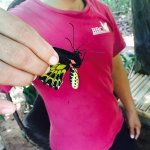 Photo de Banteay Srey Butterfly Centre