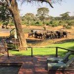 Foto de Elephant Valley Lodge