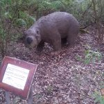 the giant wombat like creatures that used to roam these parts
