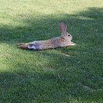 Siena Golf Club Foto