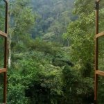 Virgin rainforest! Incredible view from the living room area