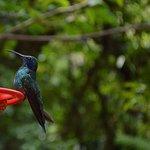 Photo of Monteverde Cloud Forest Biological Reserve