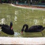 karanji lake birds area