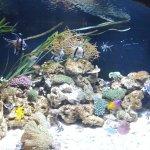 Photo of Blue Planet Aquarium
