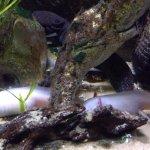 Axolotl and friends