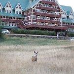 Foto van Prince of Wales Hotel