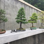 bonsai installation
