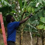 CocoHill Forest is our sister project, we use all fruits in our Restaurant at Ocean Spray
