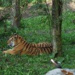 Zoo Schmiding Bild
