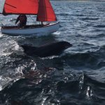 Photo of Dingle Dolphin Boat Tours