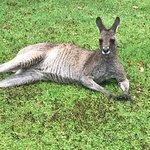 Photo de Fota Wildlife Park