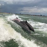 Photo of Dolphin Racer
