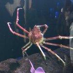 Photo of Aquarium La Rochelle