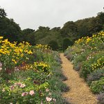 Herbaceous Borders Mottistone