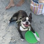 Laila on the beach with her frisby