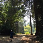 Strolling through the trees at Redwood Park