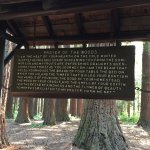 Prayer for the Woods