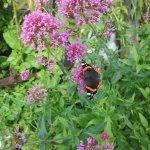 Foto de Lip na Cloiche Garden and Nursery