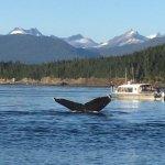 Bilde fra Harv and Marv's Outback Alaska