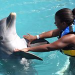 Photo of Dolphin Discovery Grand Cayman