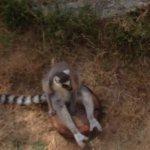 Photo de Oakland Zoo