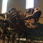 Carnegie Museum of Natural History-billede