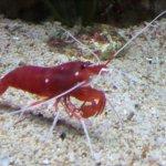 Foto di Blue Reef Aquarium
