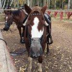 Foto de Jasper Riding Stables
