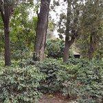 Zdjęcie Arusha Coffee Lodge