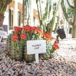 Photo of Courtyard Phoenix Mesa